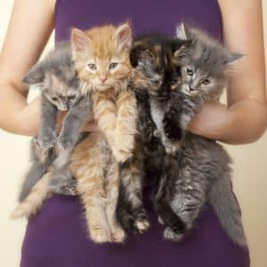 """Four Kittens being held by woman - """"Plant Lady"""" is the New """"Cat Lady""""…and it's the Best Thing Ever!!"""