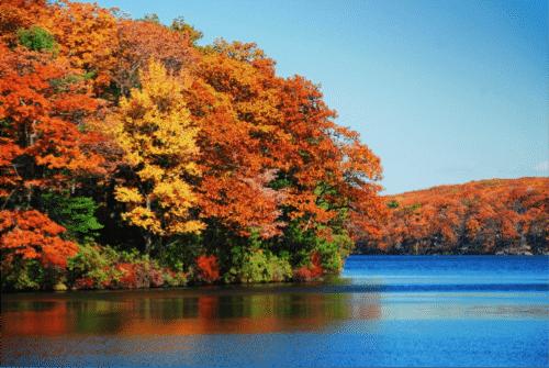 Foliage - Avanti Senior Living